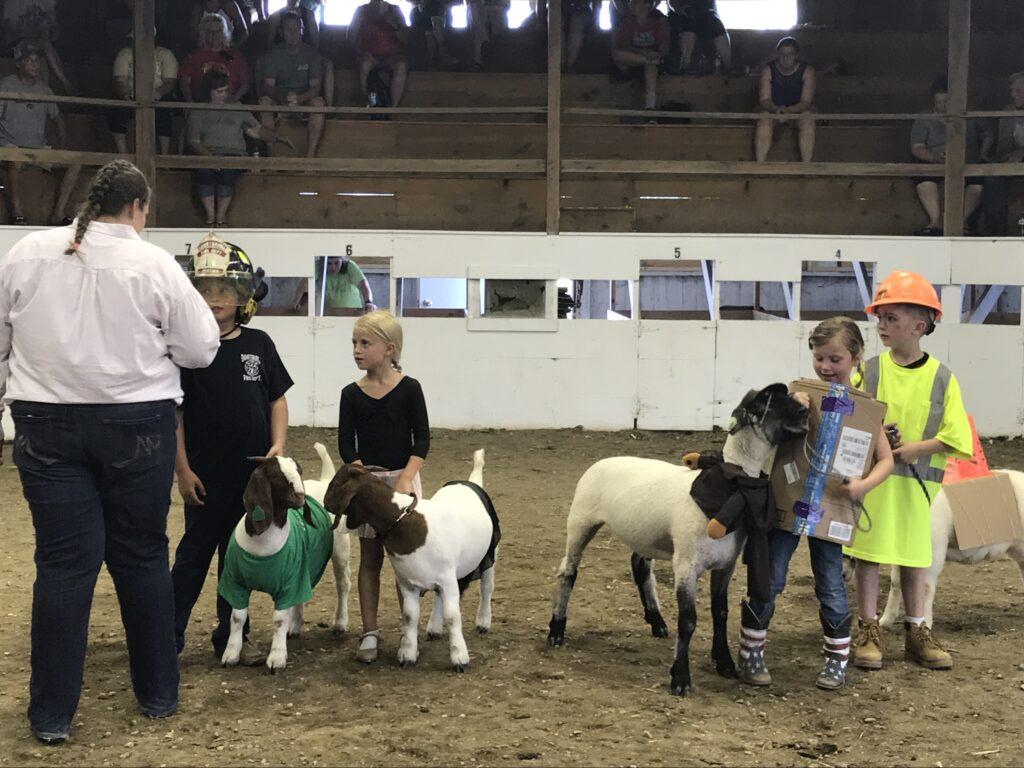 Bucket lamb/goat